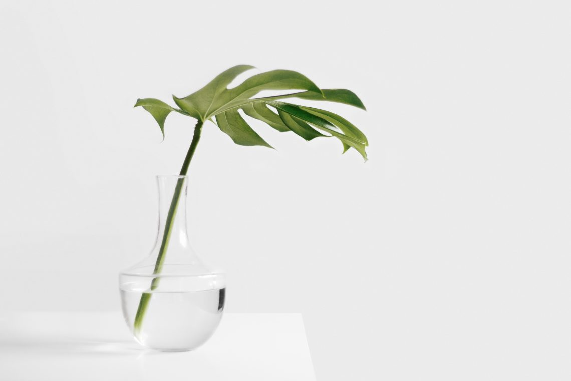 Leafe in glass vase