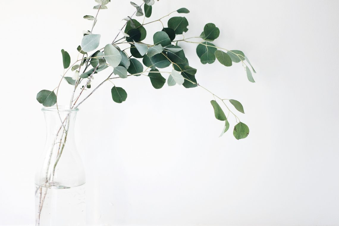 Plan in vase